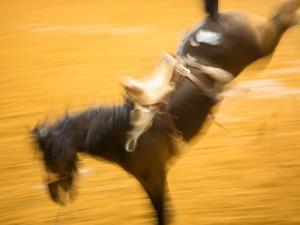Horse 1- Signature Photo